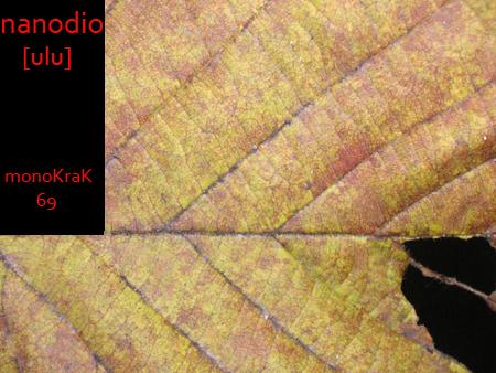 monoKraK 69 cover