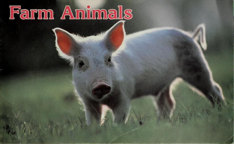 Farm animals by National Geographic Society (U.S.)
